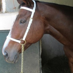 HALTER SHOW PVC WHITE WITH LEAD