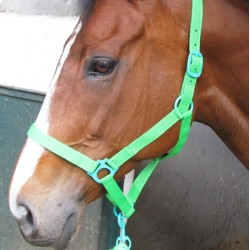 HALTER COLOUR BRITE SOLO LARGE WITH ROPE
